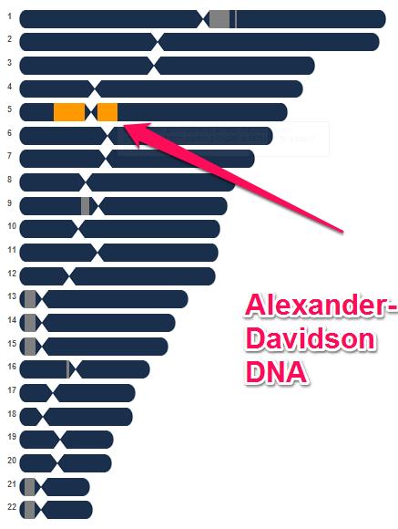 Alexander-Davidson-DNA